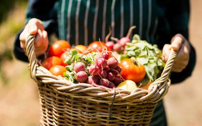 Go Organic: New Transitional Certification