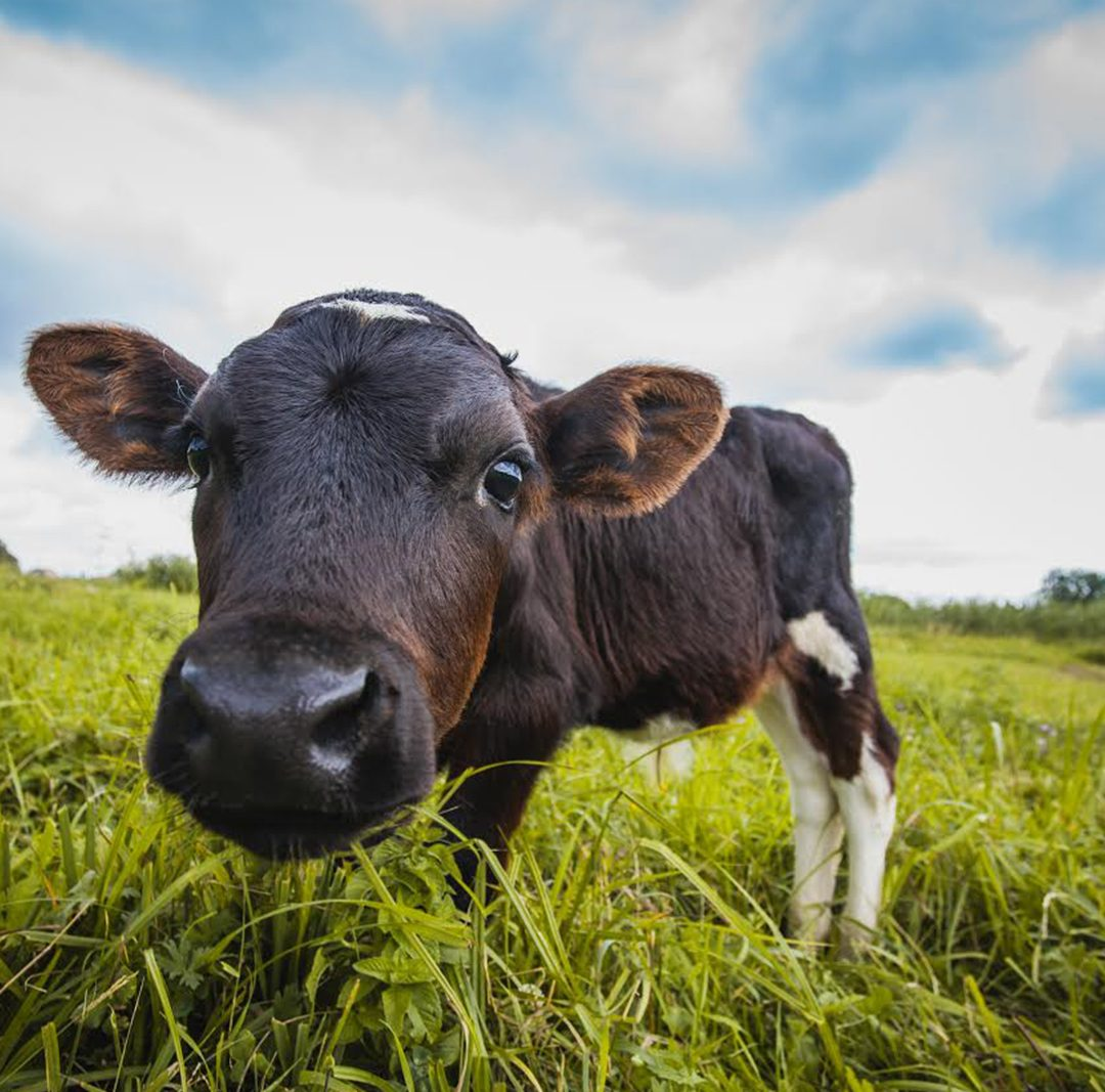 Go Grass-Fed for National Dairy Month