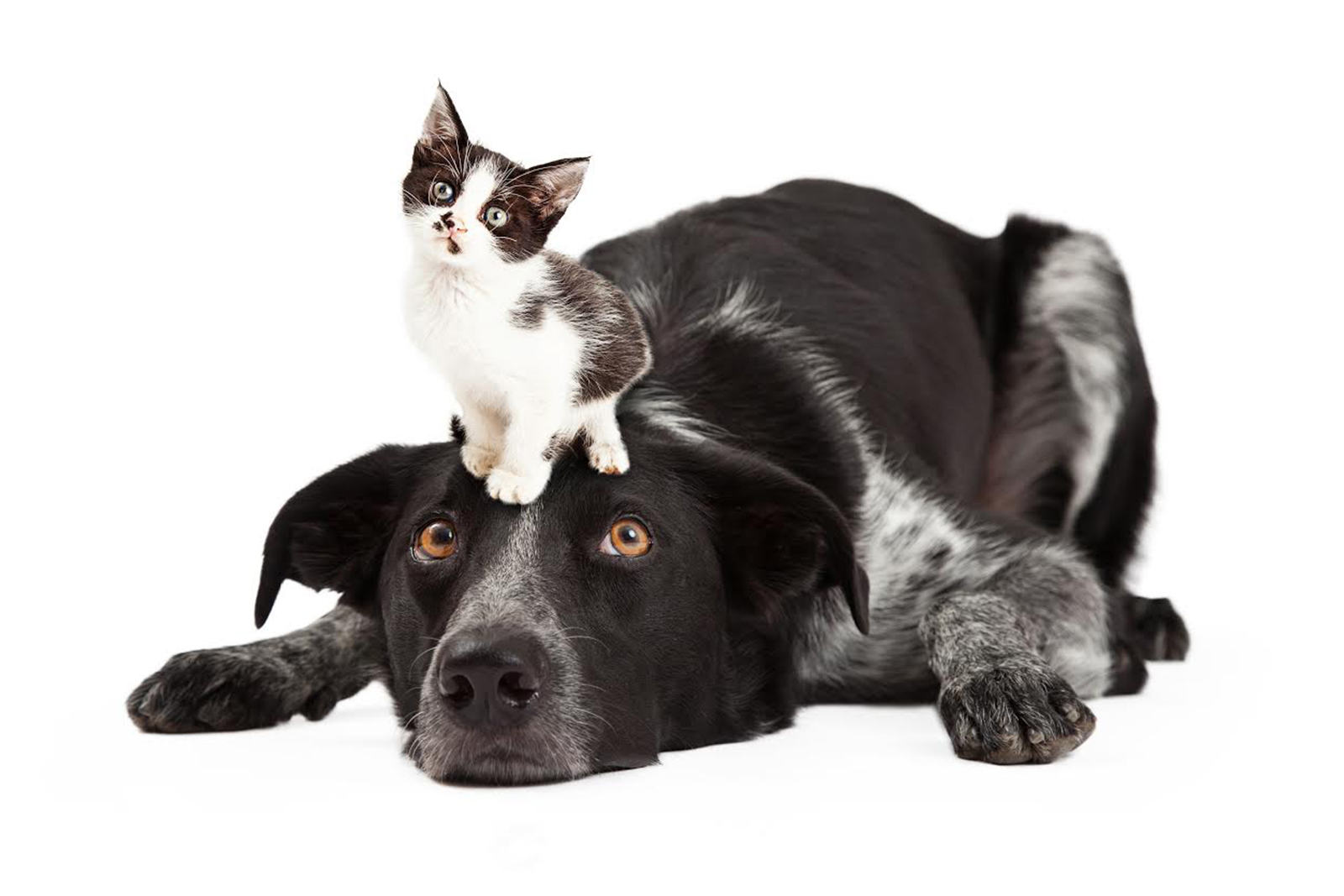 CHARITY OF THE MONTH: Cove Animal Rescue