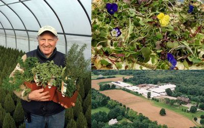 LOCAL FLAVOR: Gilbertie's Herbs and Microgreens