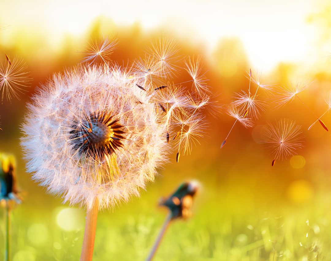 WELLNESS TOP 3: Preparing for Allergy Season